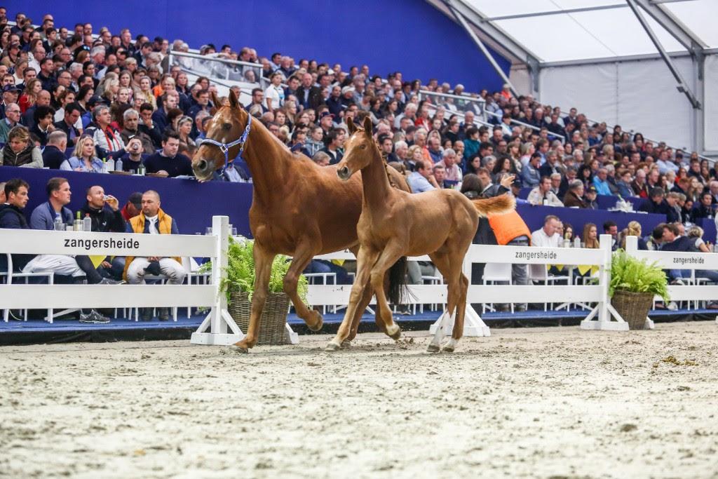 2018.09.11.99.99 FEI WBFSH Young Horses Preview Zangersheide.jpg