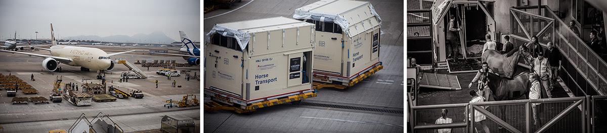 2019.02.12.99.99 Longines Masters Hong Kong CSI 5 News Horses Arrive EEM 2